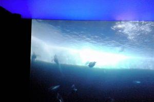 Expo Antratica : Plafond tendu imprimé rétro éclaire